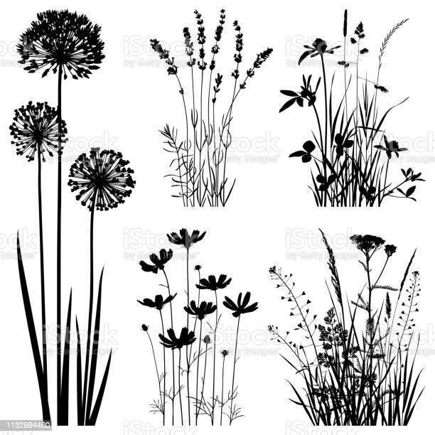 Planten Silhouetten Vectorafbeeldingen Stockvectorkunst en meer beelden van Blad
