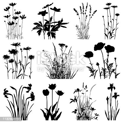 Set of plants silhouettes. Images of chamomiles, cosmos flowers, lavenders, poppies, daffodils, tulips, irises, meadow herbs. Detailed images isolated black on white background. Vector design elements. One color - black.
