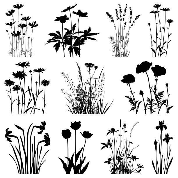 ilustrações, clipart, desenhos animados e ícones de silhuetas das plantas, imagens do vetor - papoula planta