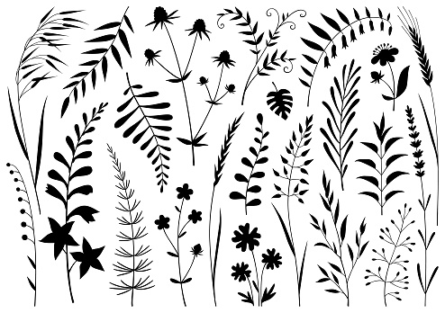 Set of decorative plants. Vector design elements isolated black on white background.