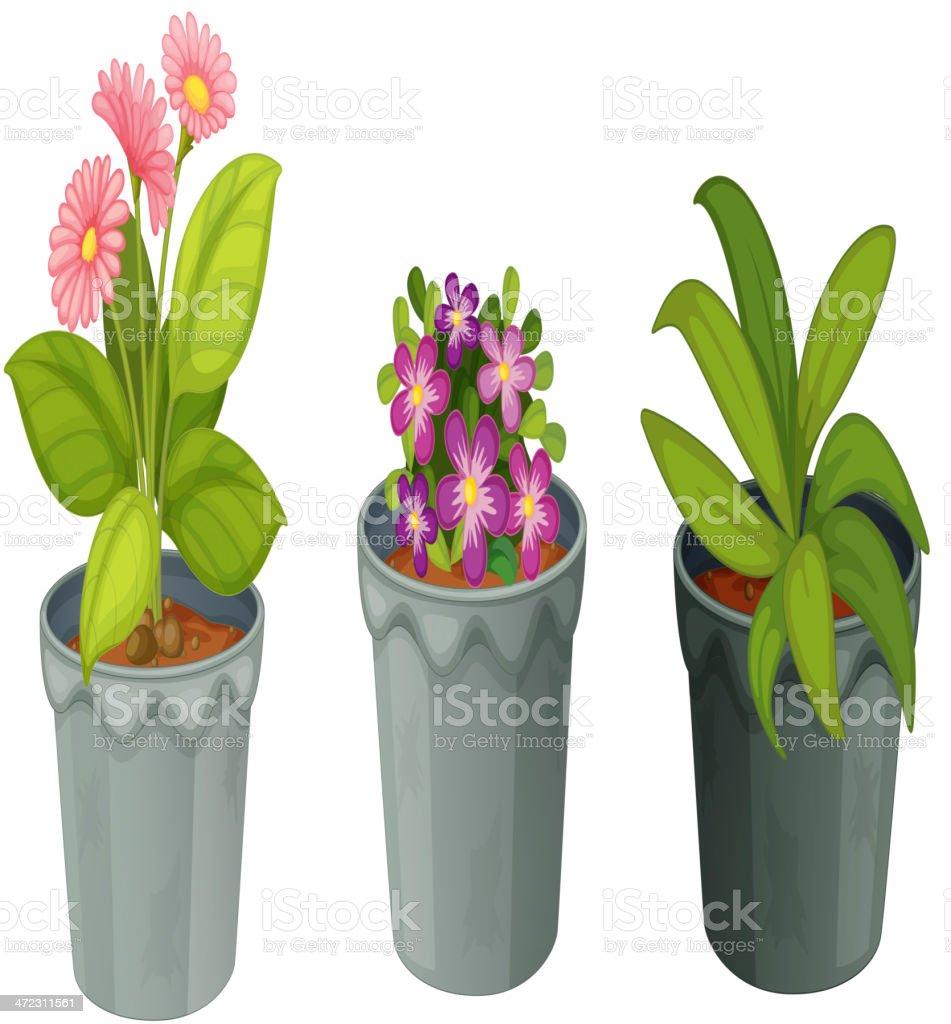Plants vector art illustration