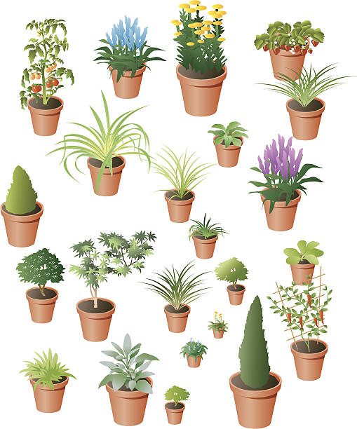 Plants A selection of pot plants, some recognisable, some less so. Includes garden flowers , vegetables,herbs and fruit. All seperately grouped for easy manipulation. garden center stock illustrations