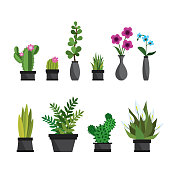 Plants,flowers and cactus in pots,natural elements,isolated on white background,flat vector illustration