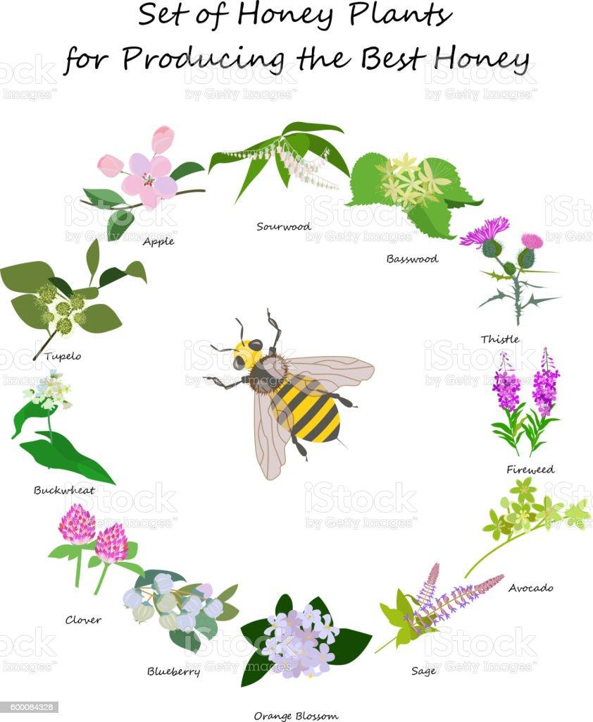 planty set for produsing the best honey vector art illustration