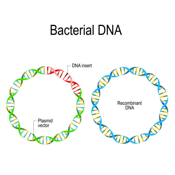 extraction of bacterial plasmid dna and Explore the latest articles, projects, and questions and answers in bacterial dna extraction, and find bacterial dna extraction experts.