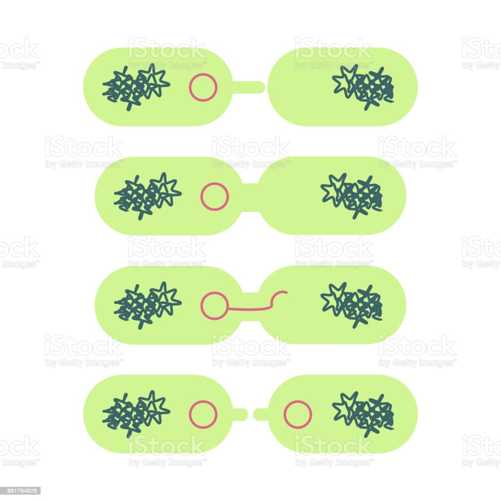 plasmid in bacterial cell. vector art illustration