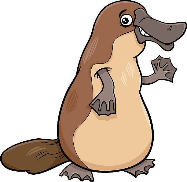 bildbanksillustrationer, clip art samt tecknat material och ikoner med platypus animal cartoon illustartion - platypus