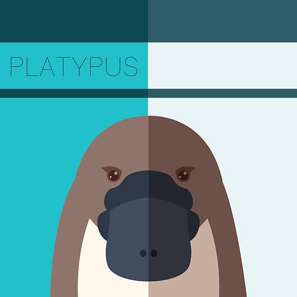 bildbanksillustrationer, clip art samt tecknat material och ikoner med platypus flat postcard - platypus