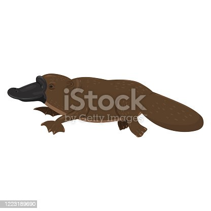 istock Platypus isolated on a white background. Vector graphics. 1223189690