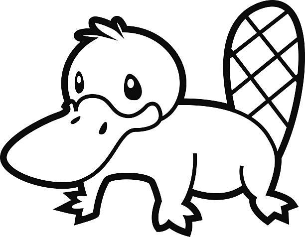 bildbanksillustrationer, clip art samt tecknat material och ikoner med platypus line - platypus