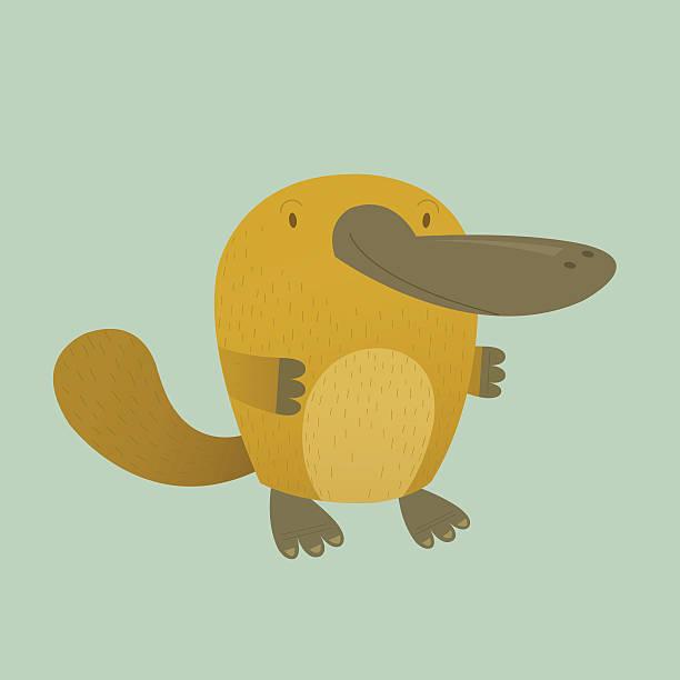 bildbanksillustrationer, clip art samt tecknat material och ikoner med platypus - platypus