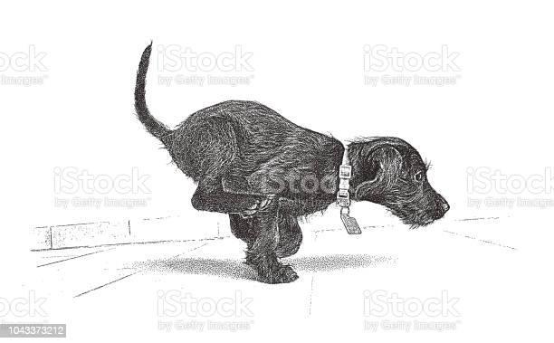 Playful puppy running miniature schnauzer vector id1043373212?b=1&k=6&m=1043373212&s=612x612&h=jzthikudzfejfabdvhcnkg5pl7m32hxi0o9mnjino5u=