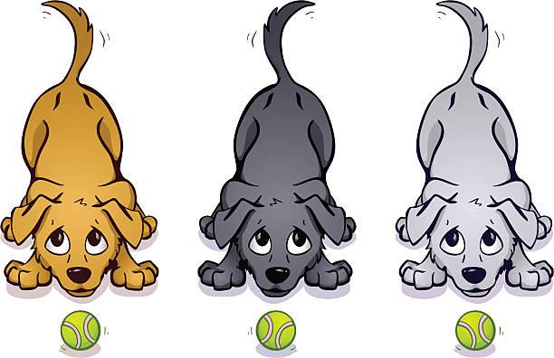 verspielte hunde - schütteln stock-grafiken, -clipart, -cartoons und -symbole