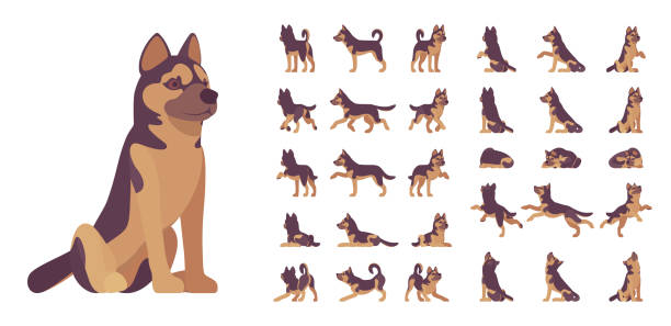Playground_Set_02 Shepherd dog set. Working breed, family pet, assistance, search service, rescue, police, and military help. Vector flat style cartoon illustration isolated, white background, different views, poses dog stock illustrations