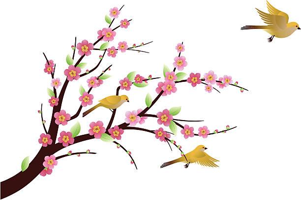 Plum Blossom Plum Blossom and flying birds. plum blossom stock illustrations