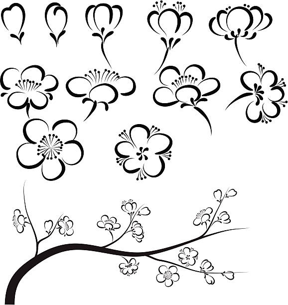 plum blossom file_thumbview_approve.php?size=1&id=23322606 plum blossom stock illustrations