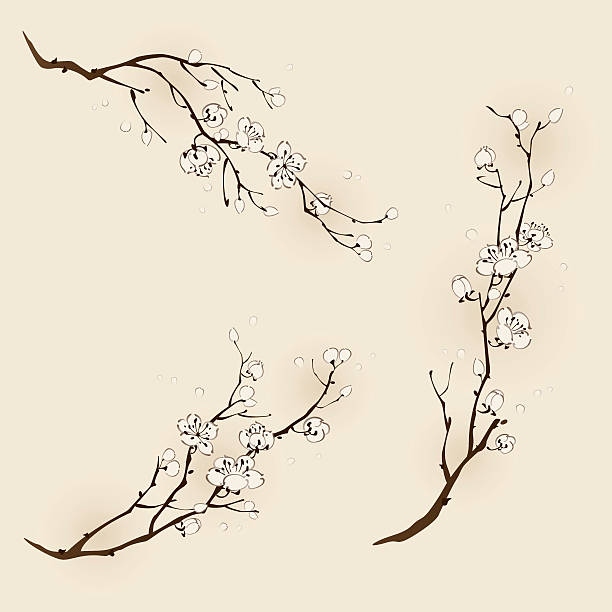 Plum blossom with line design Plum blossom with line design in three different compositions. plum blossom stock illustrations