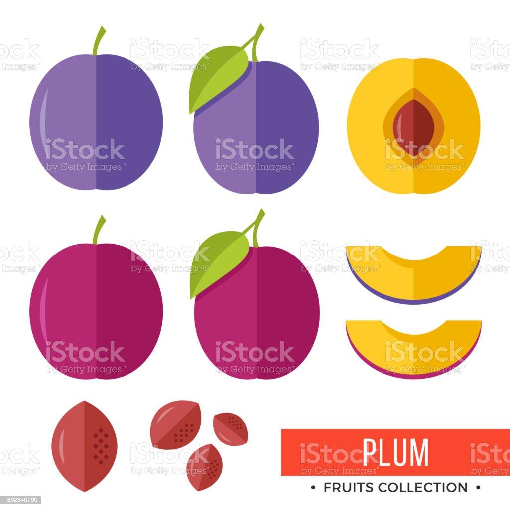 Plum. Damson purple plum and parts, slices, pits, leaves, core. Set of fruits. Flat design graphic elements. Vector illustration vector art illustration