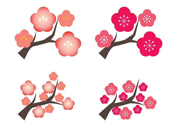 Plum tree four types Early spring flowers in Japan plum blossom stock illustrations