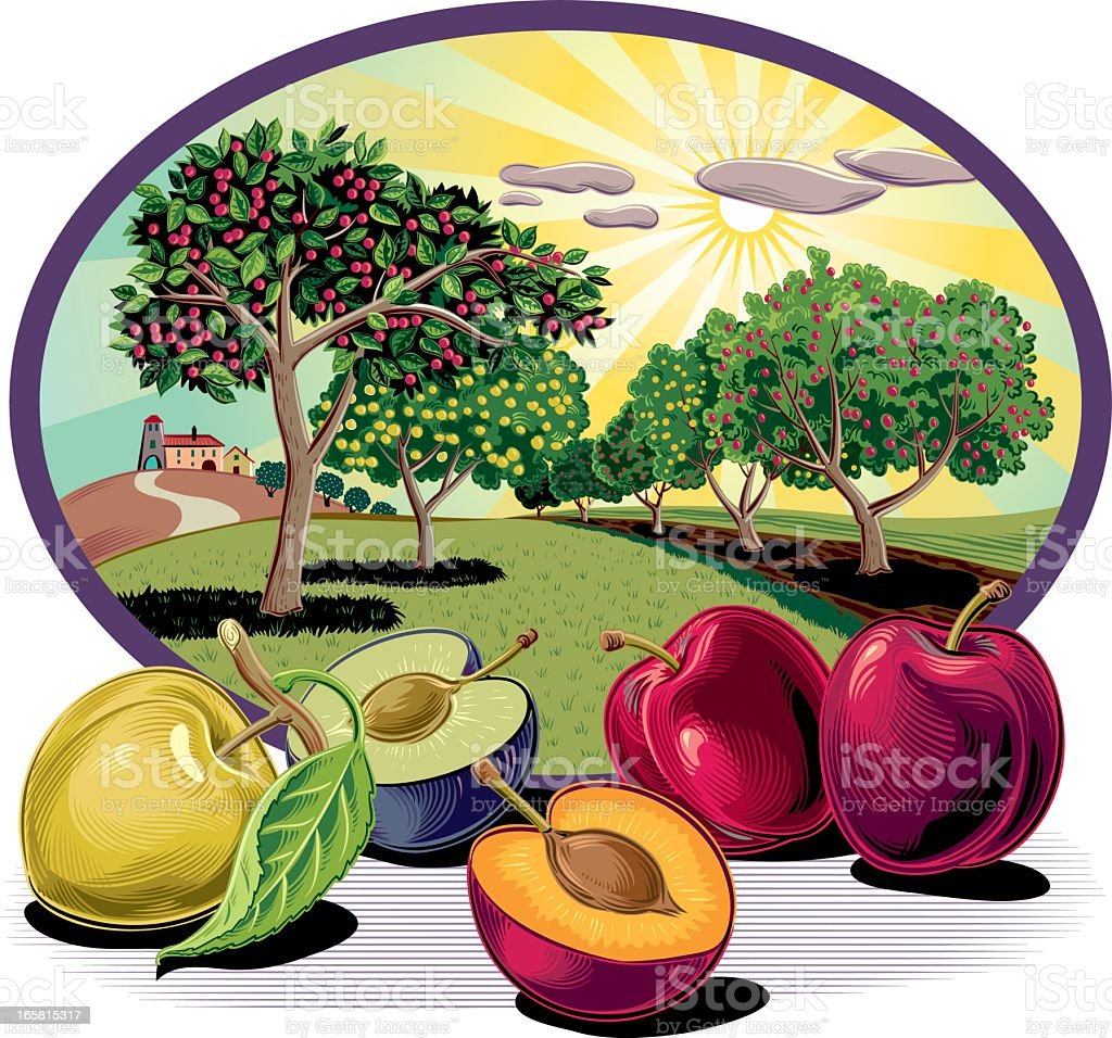 Plum tree in oval frame vector art illustration