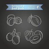 Hand drawn sketch tasty fresh fruit. Vector illustration