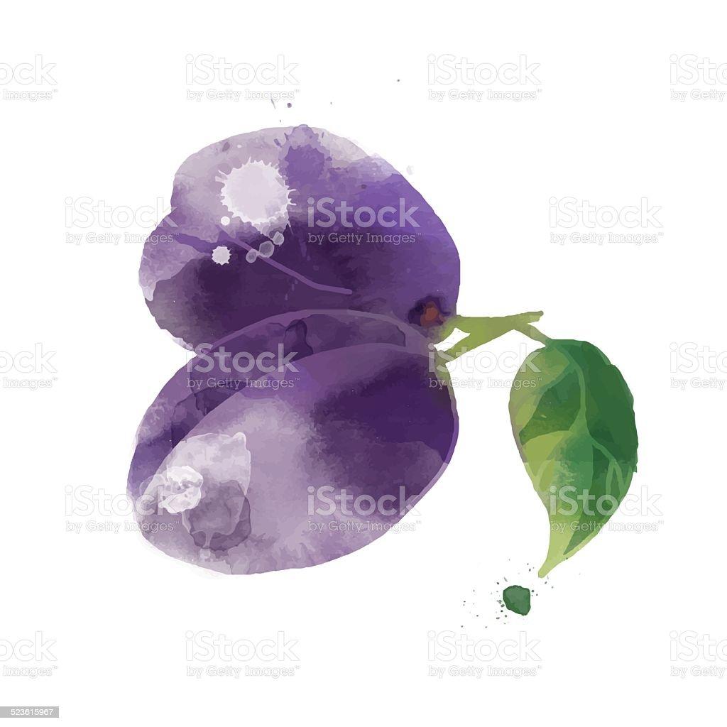 plum vector art illustration