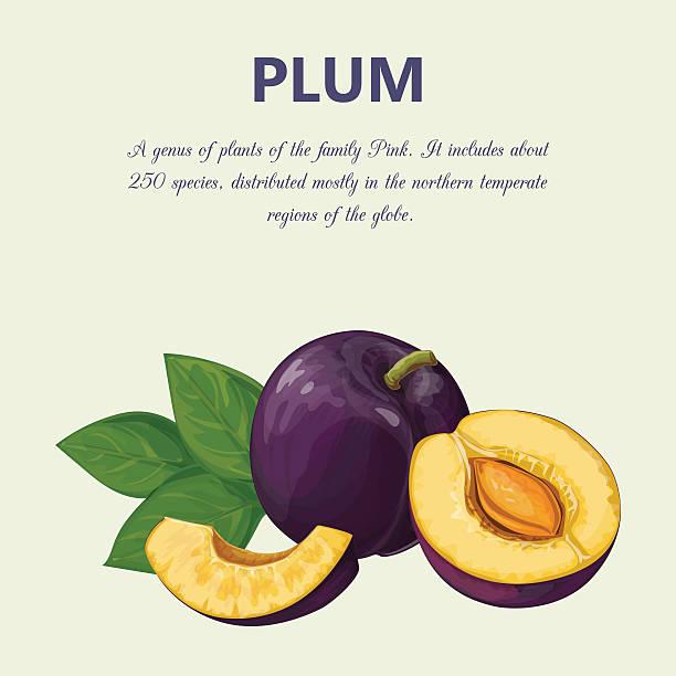 plum  - pflaumenkuchen stock-grafiken, -clipart, -cartoons und -symbole