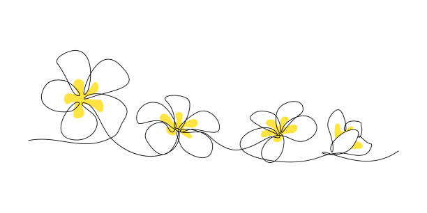 Plumeria flower border Plumeria flowers in continuous line art drawing style. Minimalist black line sketch on white background. Vector illustration frangipani stock illustrations