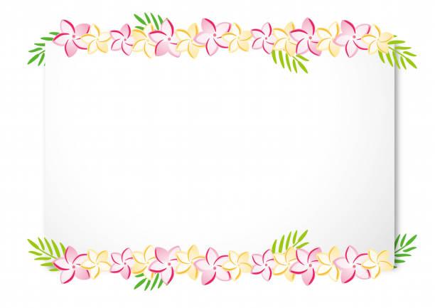 plumeria flower on white board illustration - hawaiian lei stock illustrations, clip art, cartoons, & icons