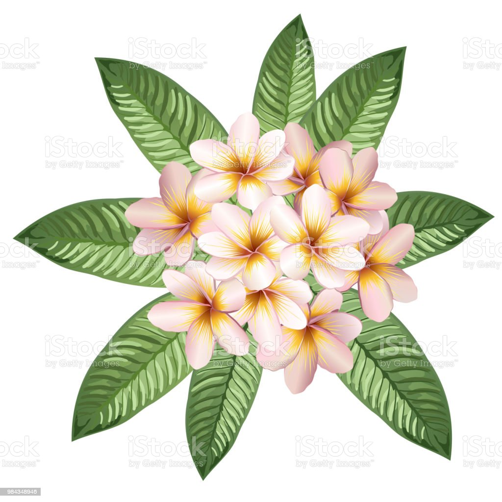 Plumeria Flowers And Leaves Realistic Vector Illustration Stock