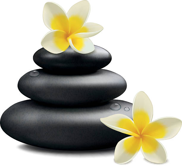 Plumeria flowers and zen stone Plumeria flowers and zen stone isolated on white background. Vector illustration frangipani stock illustrations