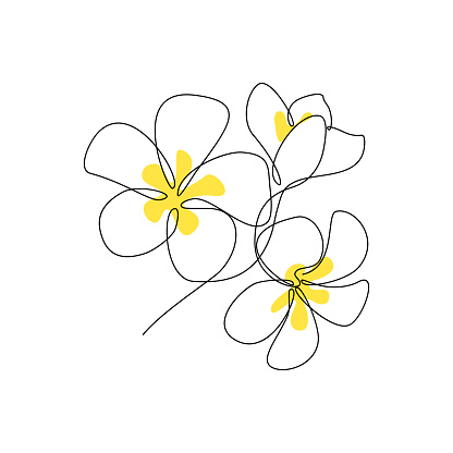 Plumeria flowers bunch in continuous line art drawing style. Minimalist black line sketch on white background. Vector illustration