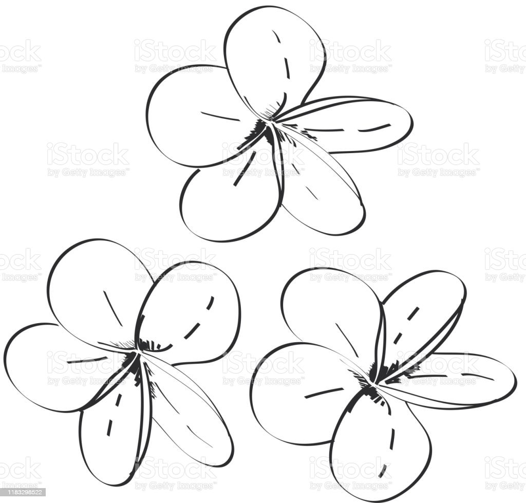 Plumeria Flowers Sketch Black Contour Isolated On White Background Simple Art Vector Stock Illustration Download Image Now Istock