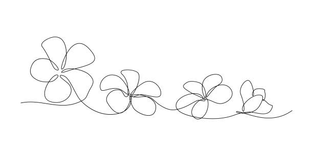 Plumeria flowers Plumeria flowers in continuous line art drawing style. Minimalist black line sketch on white background. Vector illustration frangipani stock illustrations