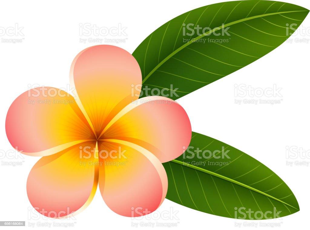 royalty free clip art of plumeria clip art vector images rh istockphoto com plumeria flower clipart pink plumeria clipart