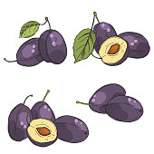 Hand drawn plums. Fruits on white background. Vector sketch  illustration.