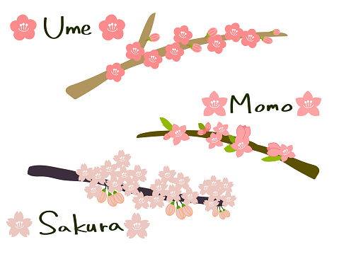 Plums, peaches, cherry blossoms