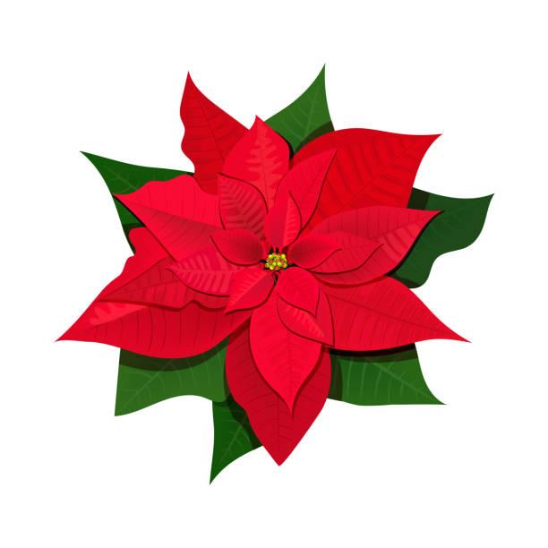 16 395 Poinsettia Illustrations Royalty Free Vector Graphics Clip Art Istock