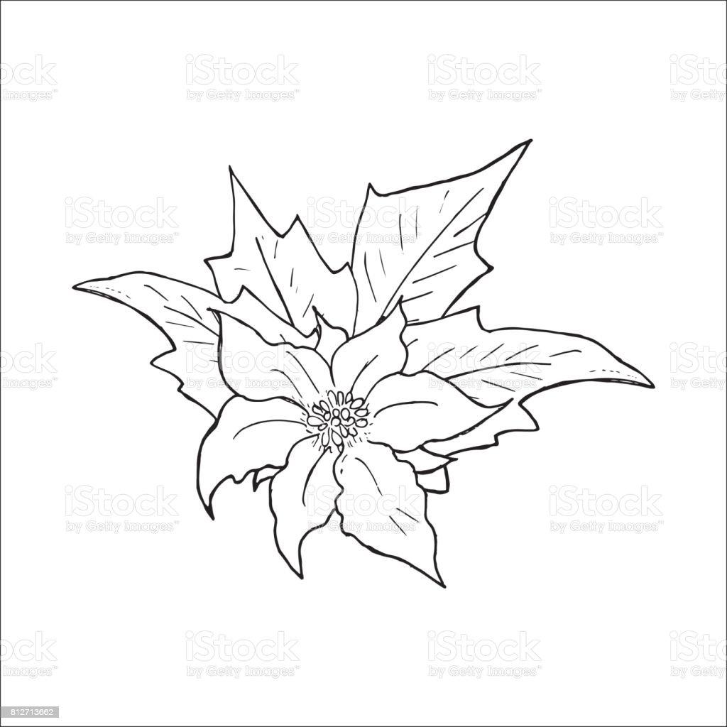 Weihnachtsstern Blume Gezeichnete Handsymbol Umrissskizzedoodle ...