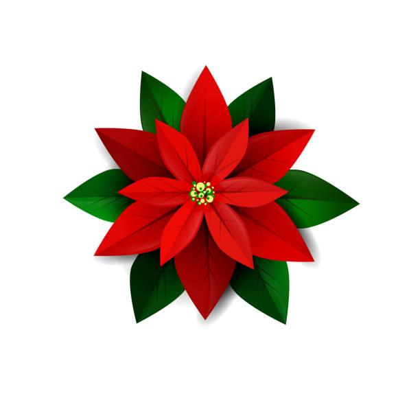 4960b4dd8 Top 60 Poinsettia Clip Art, Vector Graphics and Illustrations - iStock