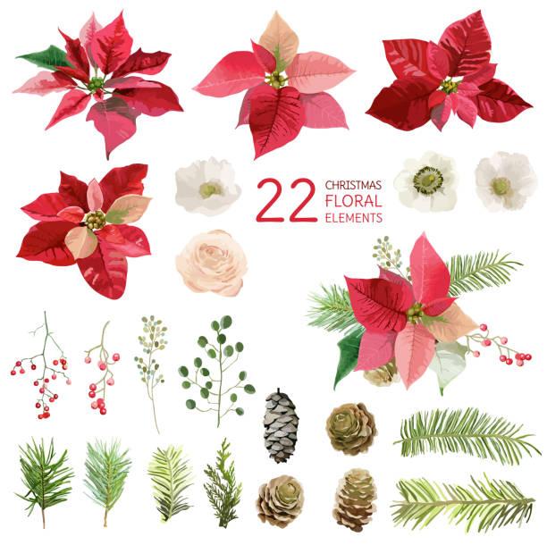 stockillustraties, clipart, cartoons en iconen met poinsettia flowers and christmas floral elements - in watercolor - kerstster