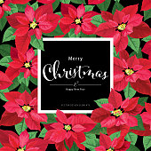 Poinsettia flowers in red and green color frame on black background. Vector set of Christmas elements for holiday invitations, greeting card and advertising design.