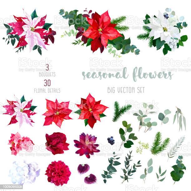 Poinsettia flowers mix of seasonal plants and herbs big vector vector id1009095008?b=1&k=6&m=1009095008&s=612x612&h=cgirbuv2eukeanworbwzua4djbs2sxc0h vj4fqjhg4=