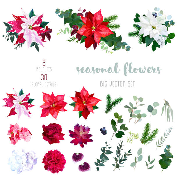 16 395 Poinsettia Illustrations Royalty Free Vector Graphics Clip Art Istock