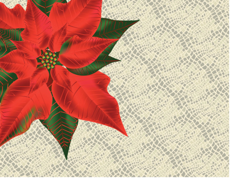Poinsettia on lace tablecloth
