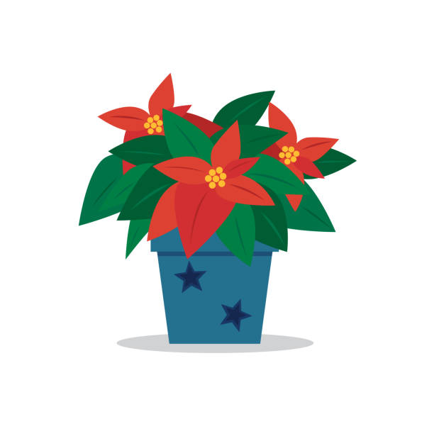 stockillustraties, clipart, cartoons en iconen met poinsettia - kerstster