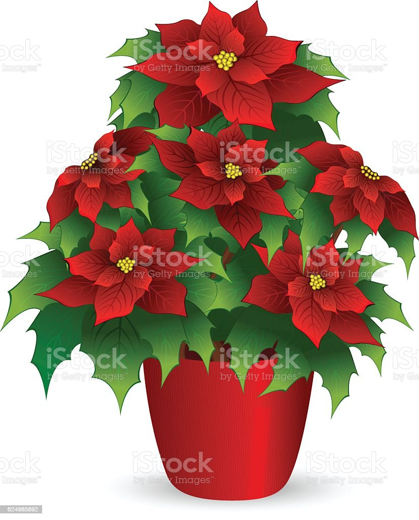 royalty free red christmas poinsettia flower in pot clip art vector rh istockphoto com