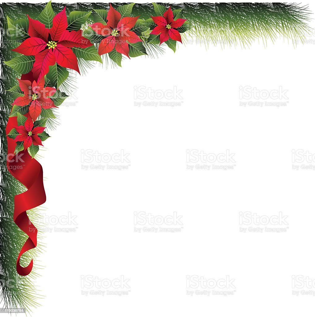 Poinsettias & Evergreens royalty-free poinsettias evergreens stock vector art & more images of angle