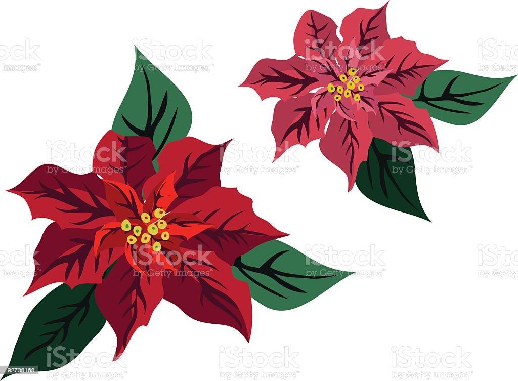 Poinsettias Illustration royalty-free stock vector art