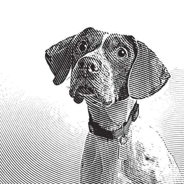 pointer dog in animal shelter hoping to be adopted - граттаж stock illustrations